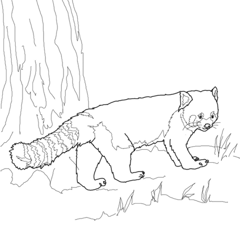 red panda face coloring page panda cute drawing at getdrawingscom free for personal face page red panda coloring
