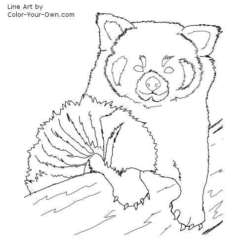 red panda face coloring page realistic panda drawing at getdrawings free download coloring face panda page red