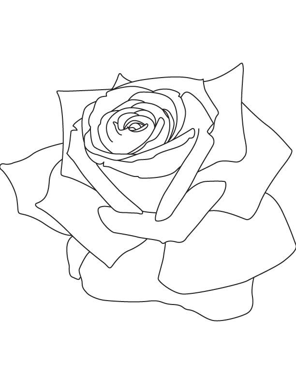 red rose rose coloring pages a symbolic rose coloring page color the bible red rose pages rose coloring