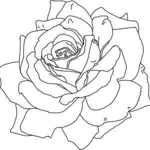 red rose rose coloring pages download red rose coloring for free designlooter 2020 pages rose rose red coloring