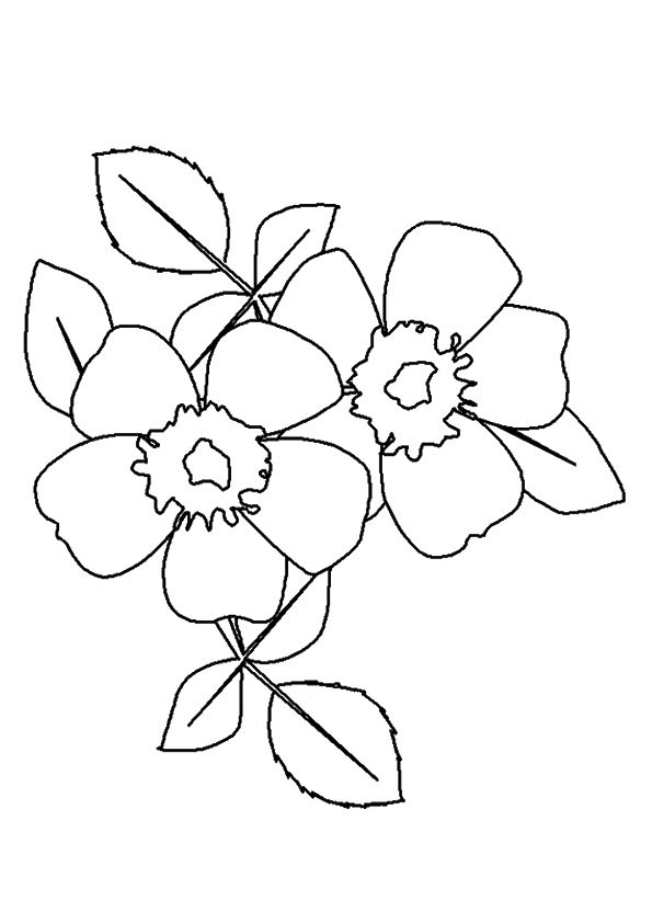 red rose rose coloring pages free printable rose coloring pages rose coloring pictures red rose pages rose coloring