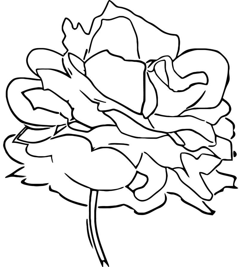 red rose rose coloring pages red realistic rose coloring pages printable pages rose rose coloring red