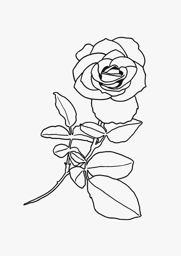 red rose rose coloring pages red rose coloring download red rose coloring for free 2019 pages coloring red rose rose