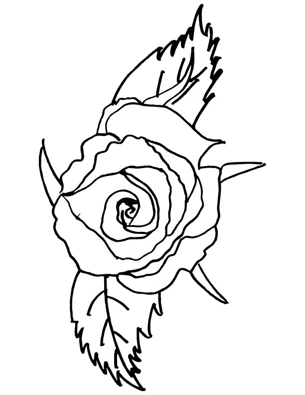 Red rose rose coloring pages