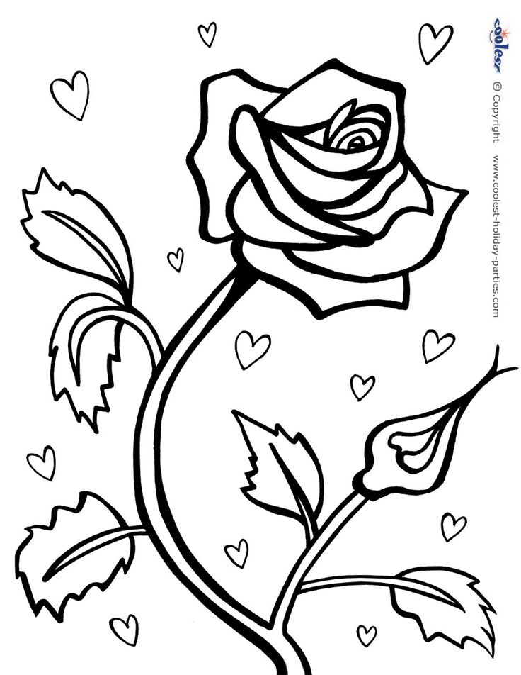 red rose rose coloring pages red roses drawing at getdrawings free download red rose pages rose coloring