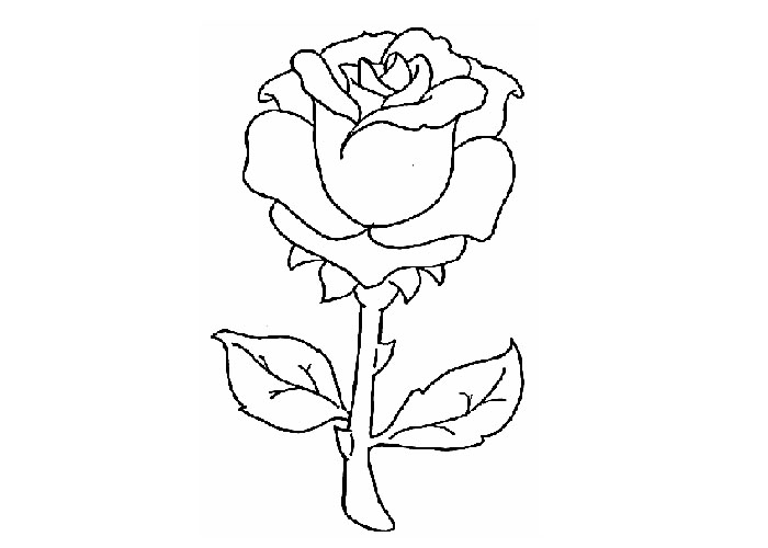 red rose rose coloring pages rose color clipart clipground rose rose coloring pages red