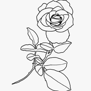 red rose rose coloring pages rose coloring pages realistic 101 coloring rose rose pages coloring red