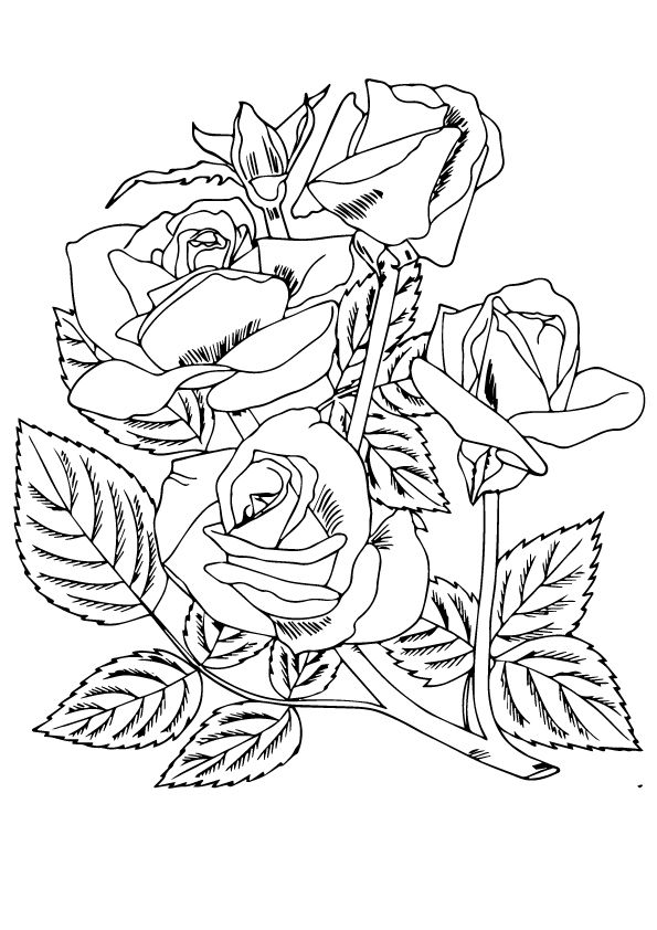red rose rose coloring pages roses and hearts coloring pages best coloring pages for kids red rose coloring pages rose