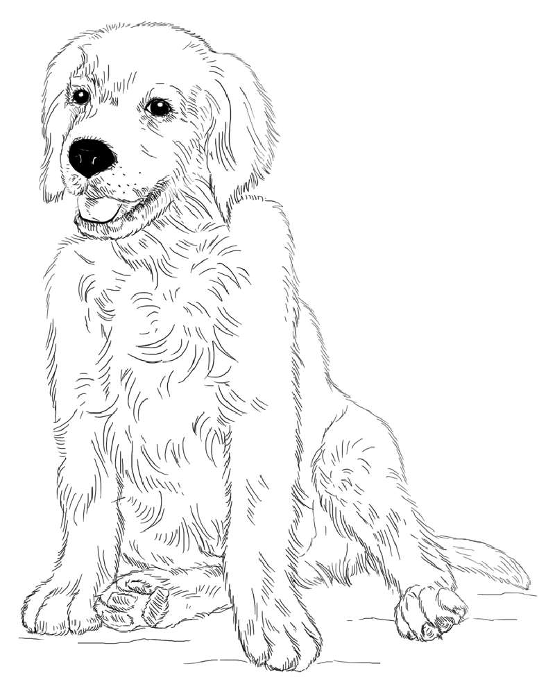 rescue dog coloring pages golden retriever coloring page for animal lovers dog rescue coloring pages