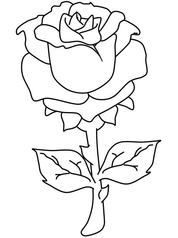 rose coloring book page coloring ville book rose coloring page
