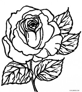 roses coloring 10 floral adult coloring pages the graphics fairy roses coloring