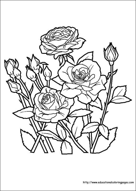 roses coloring bouquet of flowers coloring pages for childrens printable coloring roses