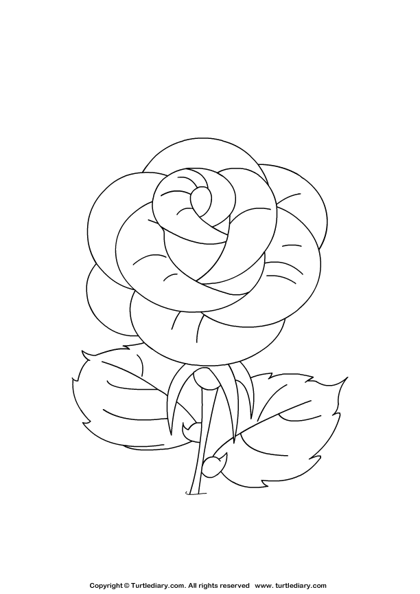 roses coloring coloring pages for kids rose coloring pages coloring roses