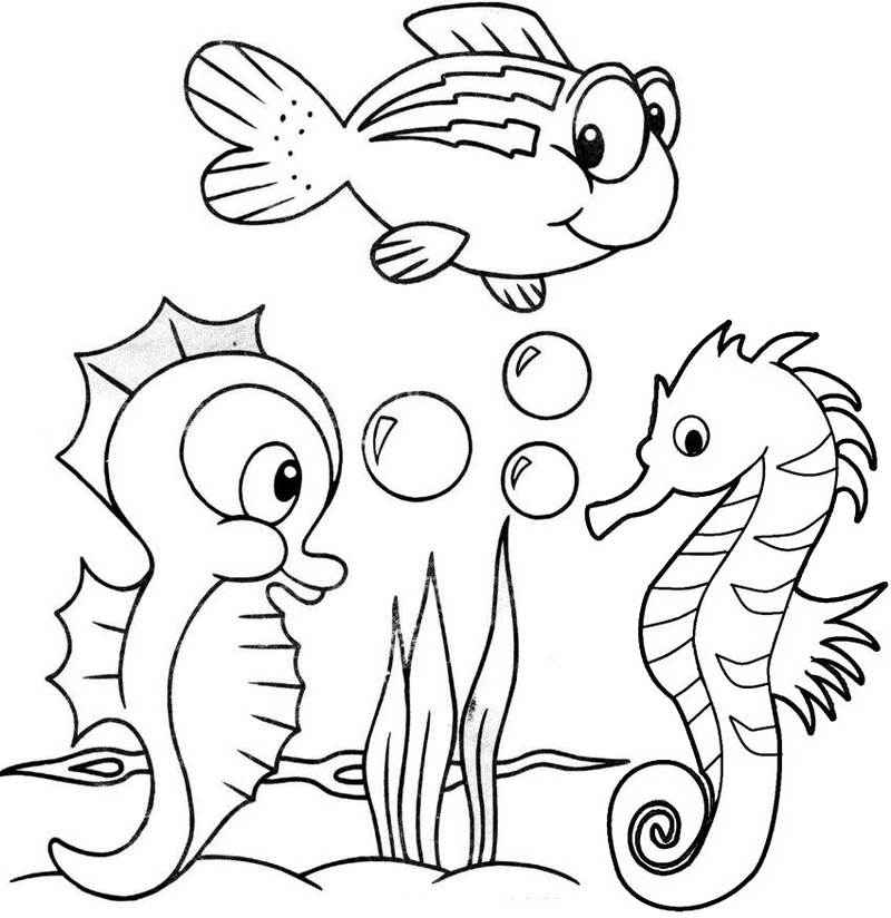 seahorse coloring pictures seahorse coloring page clipart best coloring pictures seahorse