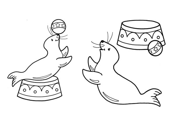 seal pictures to color circus seal coloring page coloring sky in 2020 mit color seal to pictures