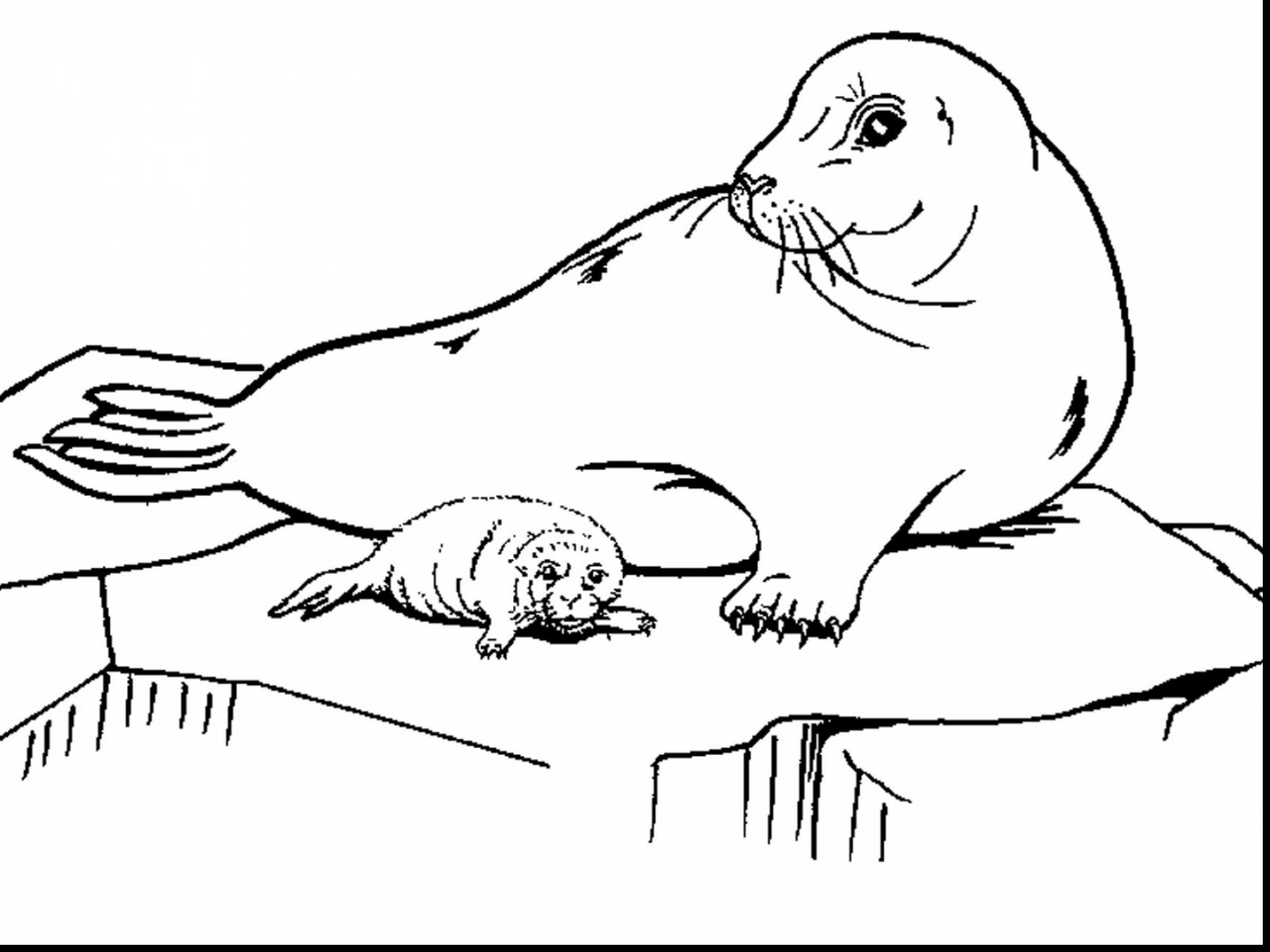 seal pictures to color download harp seal coloring for free designlooter 2020 color seal pictures to