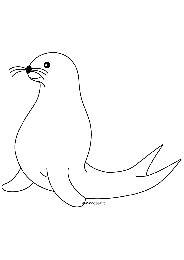 seal pictures to color seal coloring pages coloring pages to download and print pictures color seal to