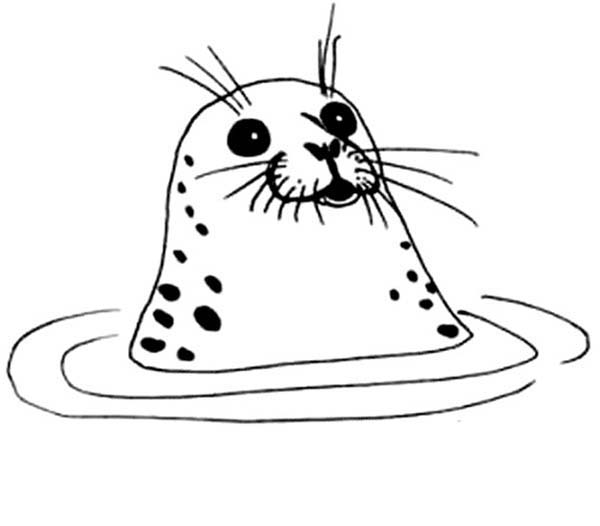 seal pictures to color seal coloring pages download and print for free to pictures color seal