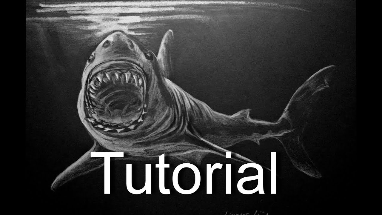 shark drawing easy great white shark drawing for beginners youtube drawing shark