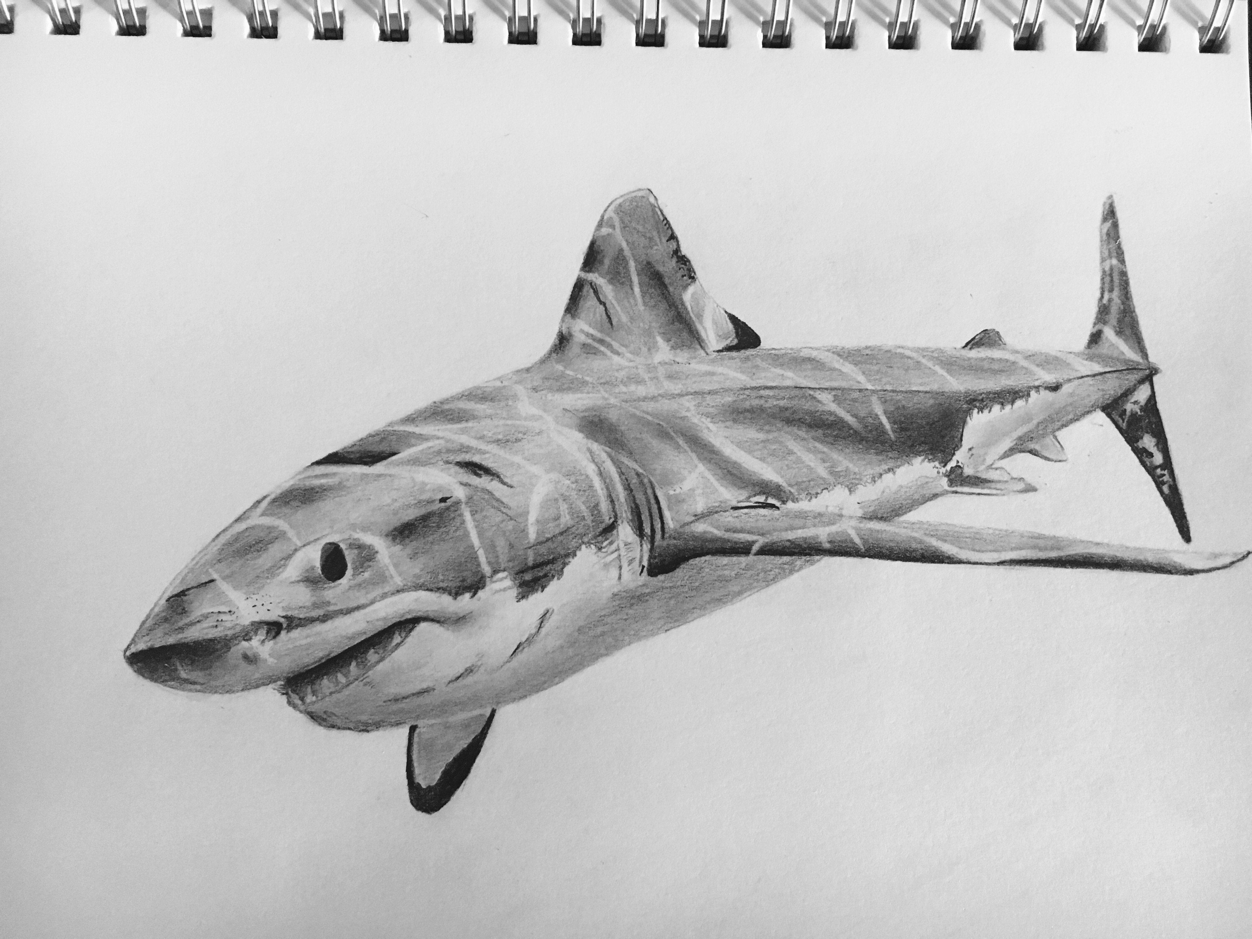 shark drawing first time drawing a shark still need to add shading for drawing shark