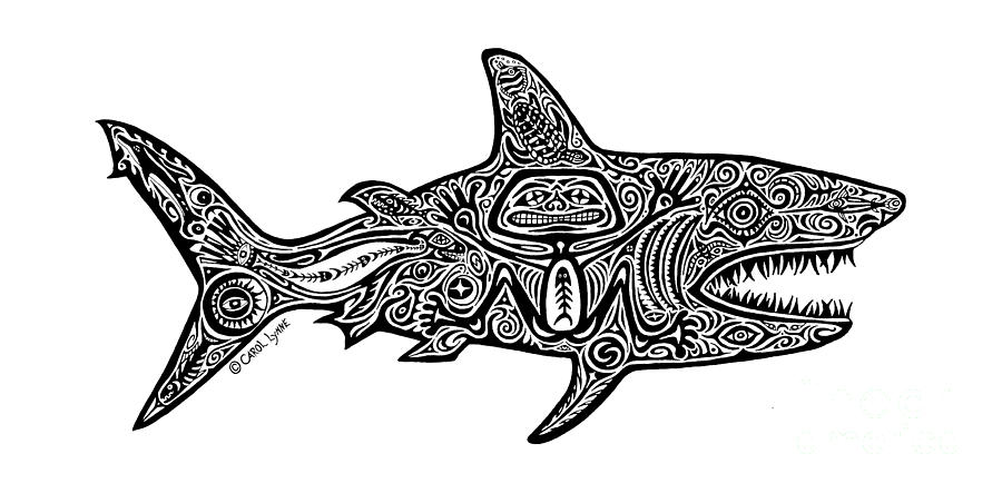shark drawing how to draw a shark draw central shark drawing