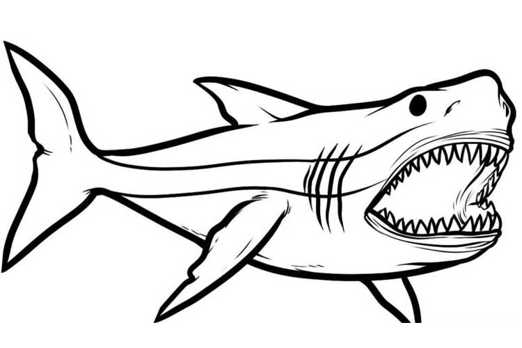 shark drawing how to draw a shark for kids step by step tutorial shark drawing