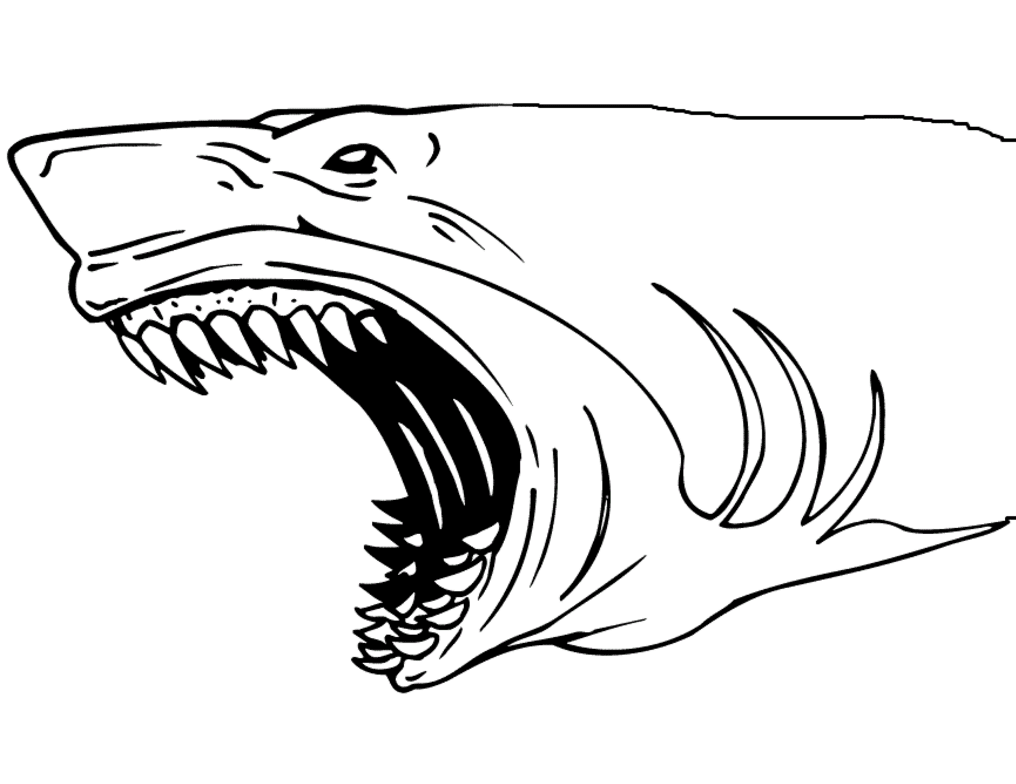 sharks pictures to color shark drawing for kids at getdrawings free download color pictures sharks to