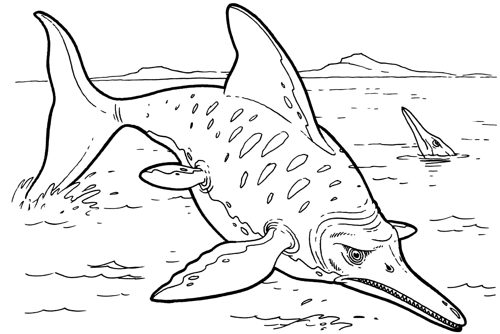 sharks pictures to color shark tooth drawing at getdrawings free download to color pictures sharks