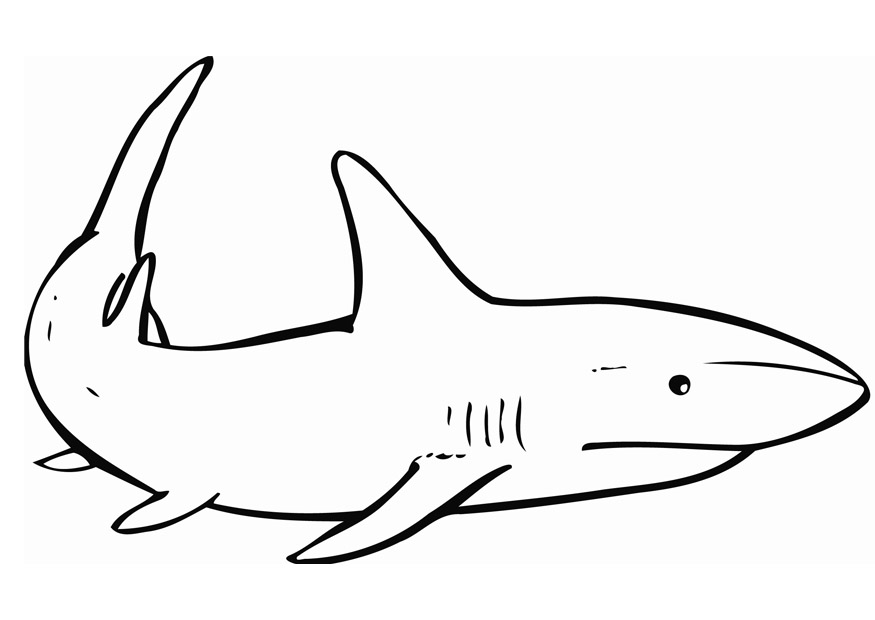 sharks pictures to color the best printable shark coloring pages 101 coloring sharks to pictures color