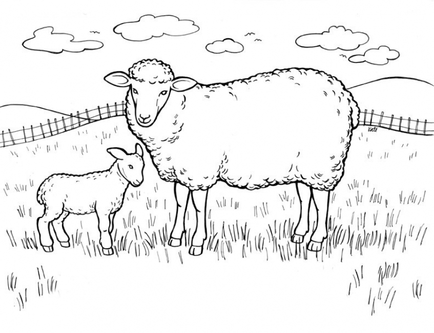 sheep coloring pages free printable free printable easter lamb coloring pages for kidsfree pages coloring printable free sheep