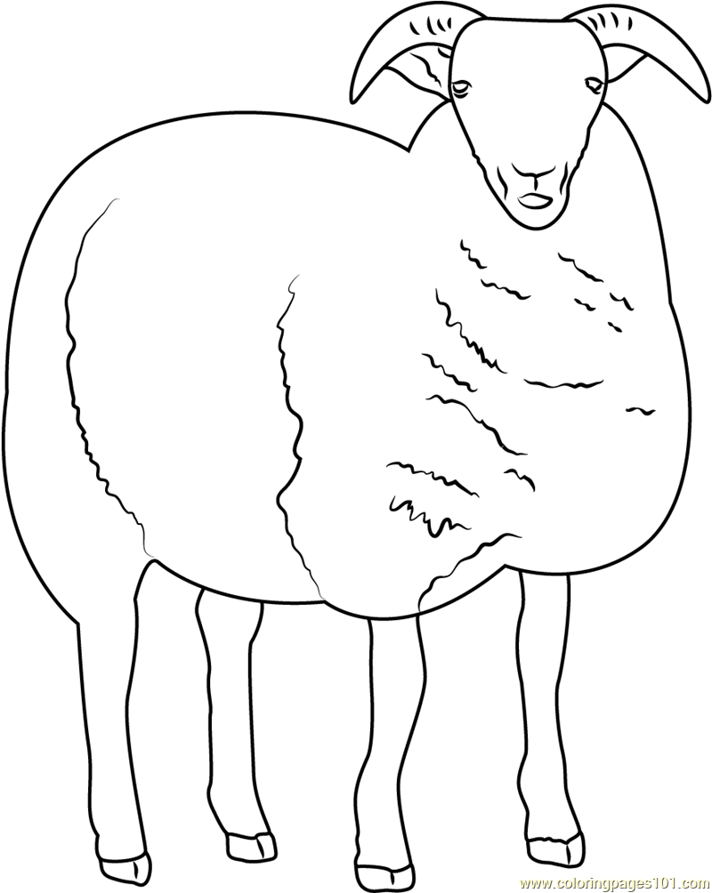 sheep coloring pages free printable free sheep pictures for kids download free clip art free coloring free pages printable sheep
