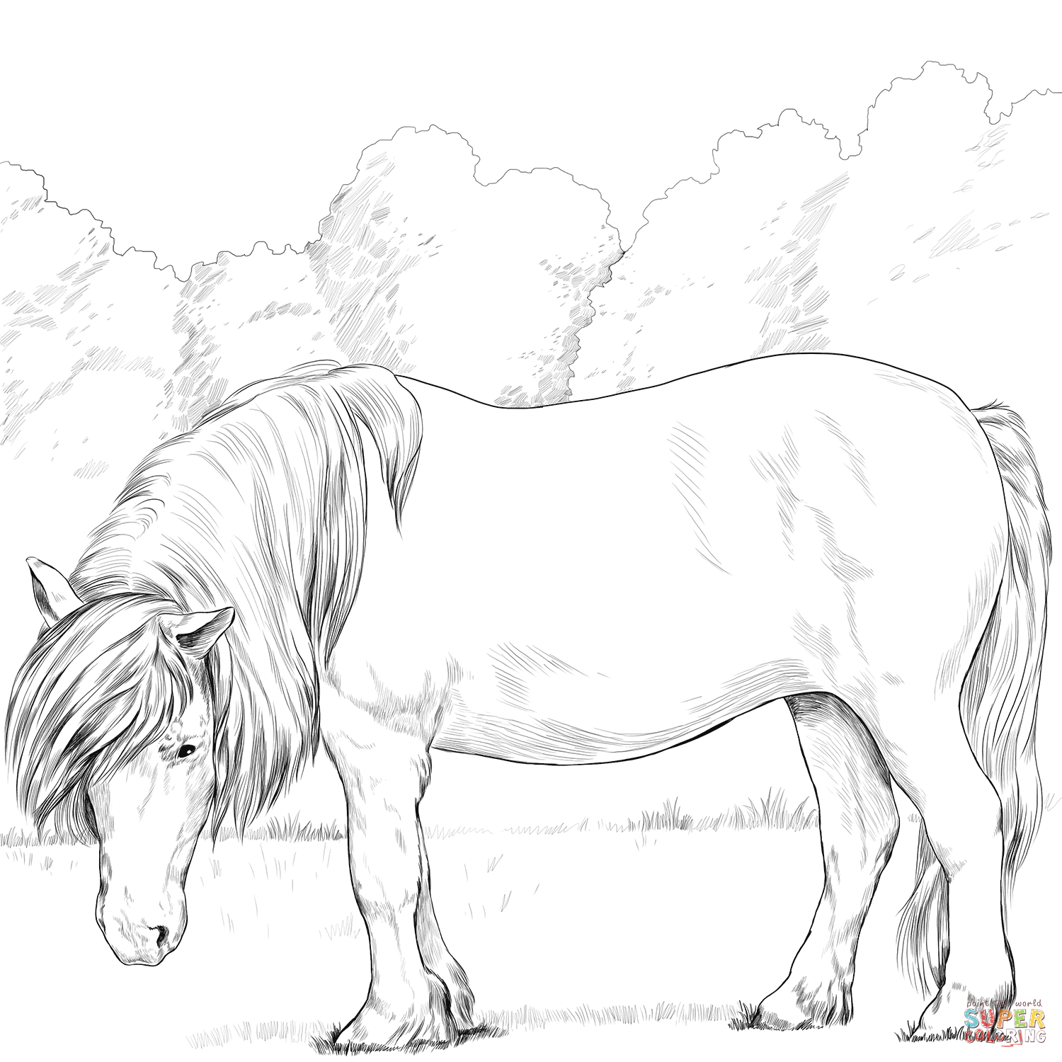 shetland pony coloring pages coloring pages of shetland ponies food ideas pages coloring pony shetland