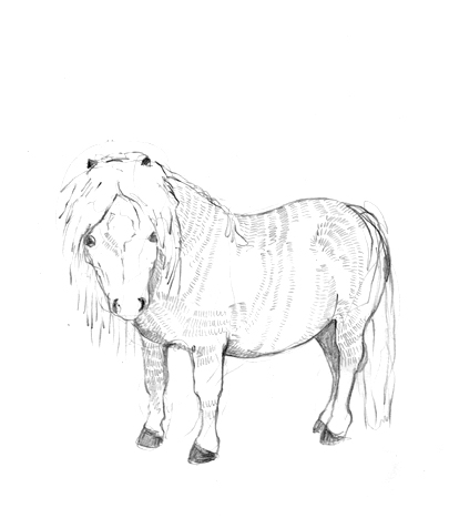 shetland pony coloring pages coloring pages of shetland ponies food ideas pages pony coloring shetland