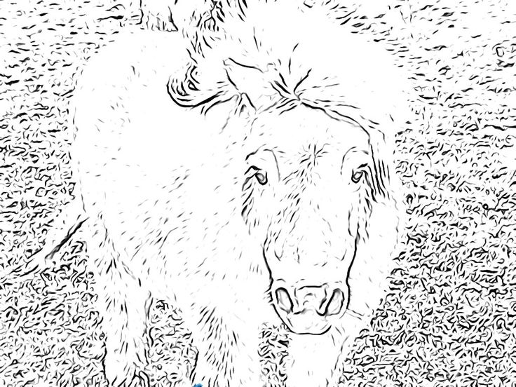 shetland pony coloring pages coloring pages pony shetland 2020 coloring shetland pony pages