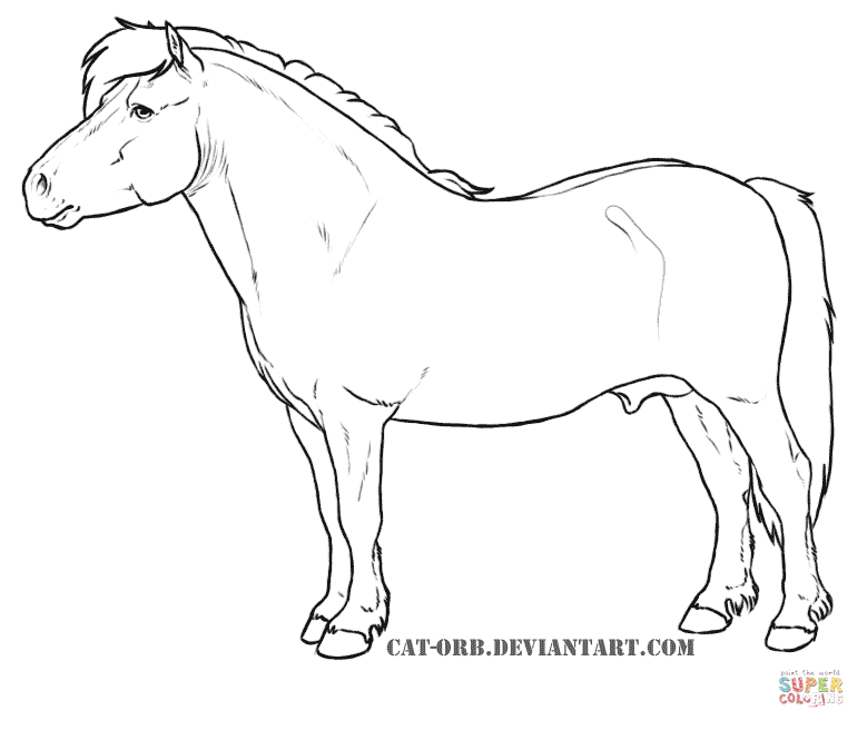 shetland pony coloring pages shetland pony coloring page free printable coloring pages pages shetland pony coloring
