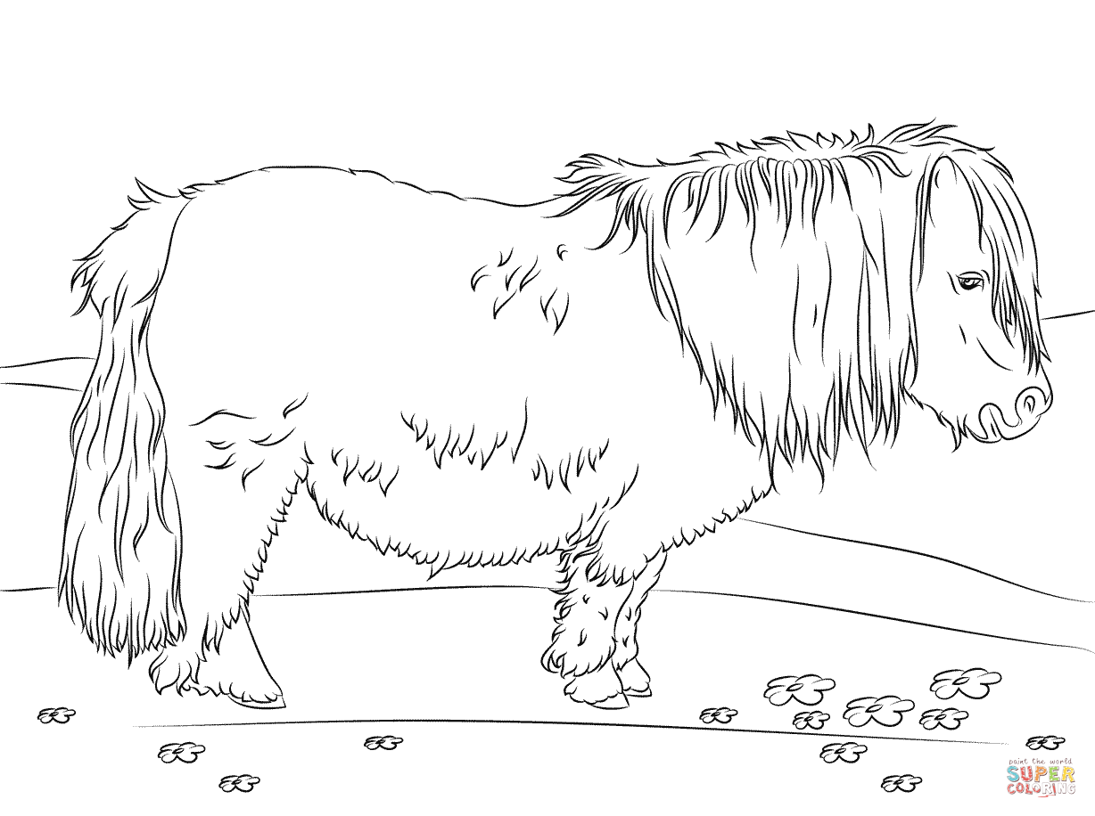 shetland pony coloring pages shetland pony coloring page free printable coloring pages pony pages coloring shetland
