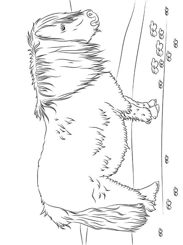 shetland pony coloring pages shetland pony coloring pages coloring pages pony coloring pages shetland