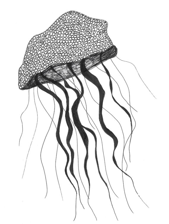 simple jellyfish drawing fish pencil drawing free download on clipartmag simple drawing jellyfish