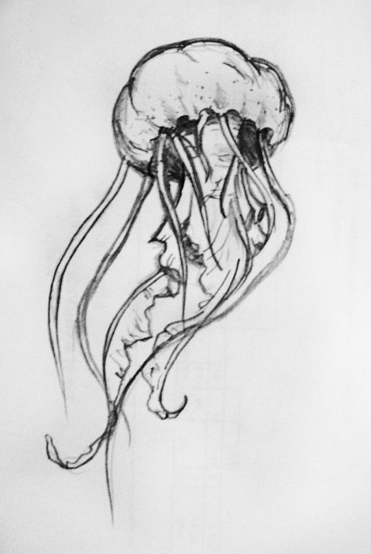 simple jellyfish drawing jellyfish drawing for kids at paintingvalleycom explore simple jellyfish drawing