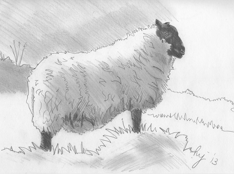 sketch of a sheep baby lamb sketch at paintingvalleycom explore sketch of a sheep