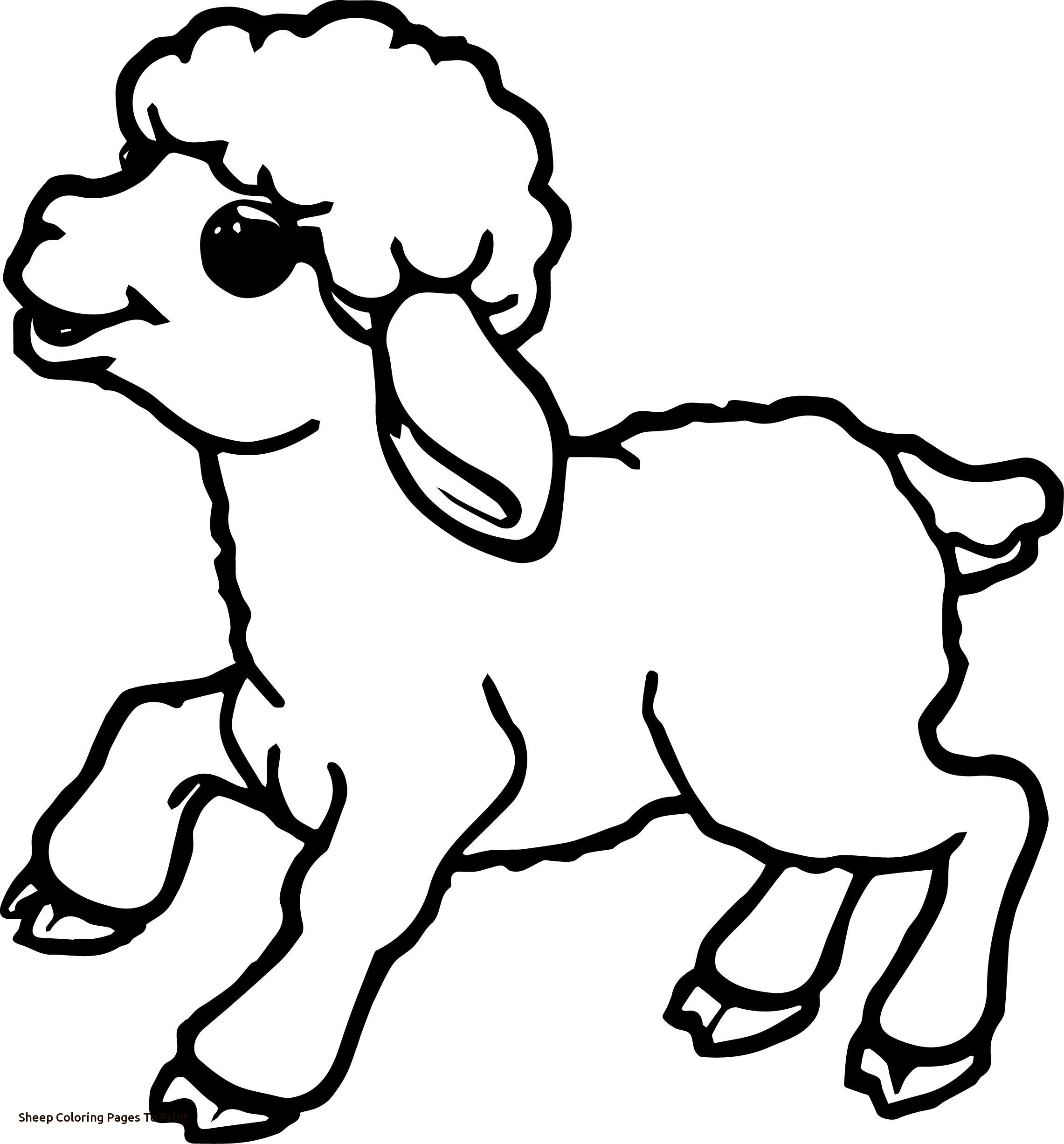 sketch of a sheep how to draw a lamb youtube of sketch a sheep