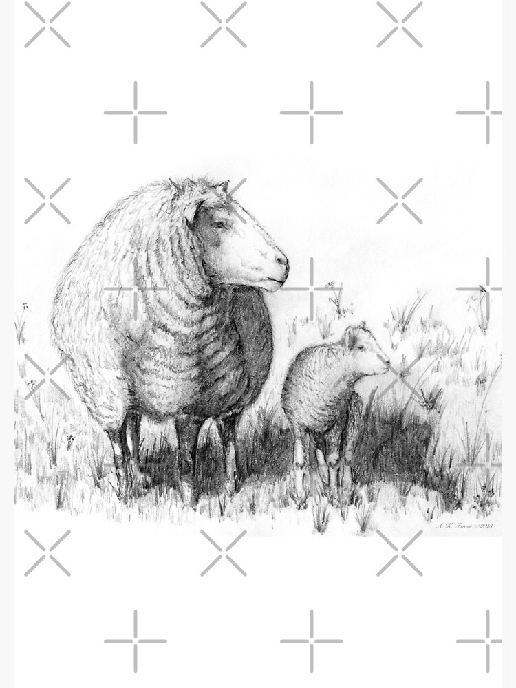 sketch of a sheep how to draw a sheep sketch sheep a of
