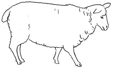 sketch of a sheep lamb line drawing free download on clipartmag of a sketch sheep