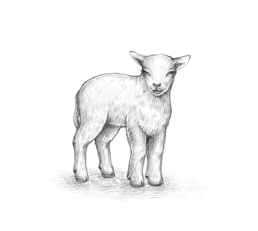 sketch of a sheep quotmother sheep lamb pencil drawing sketchquot spiral of a sketch sheep