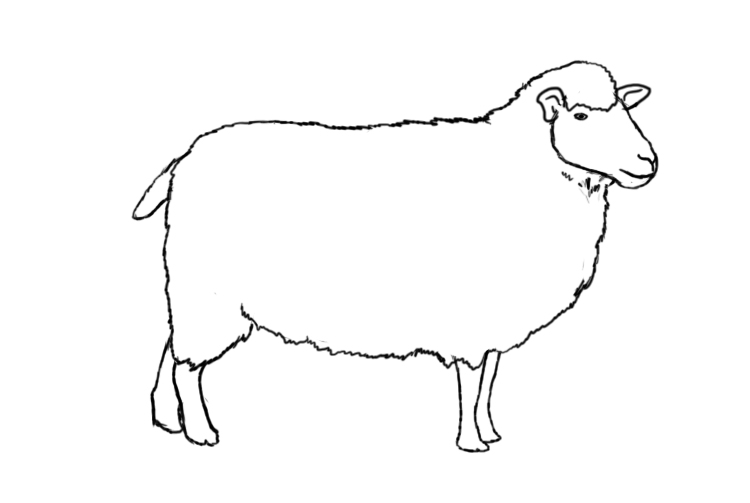 sketch of a sheep sheep face drawing at paintingvalleycom explore of sketch a sheep