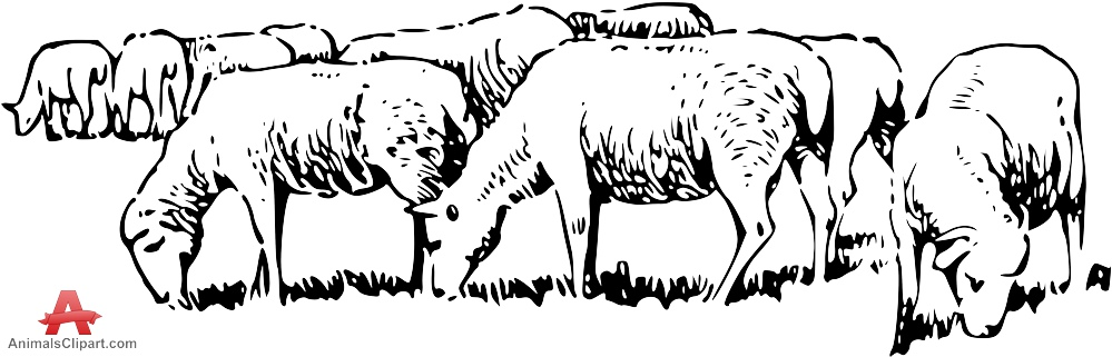 sketch of a sheep simple lamb drawing at getdrawings free download sketch sheep of a