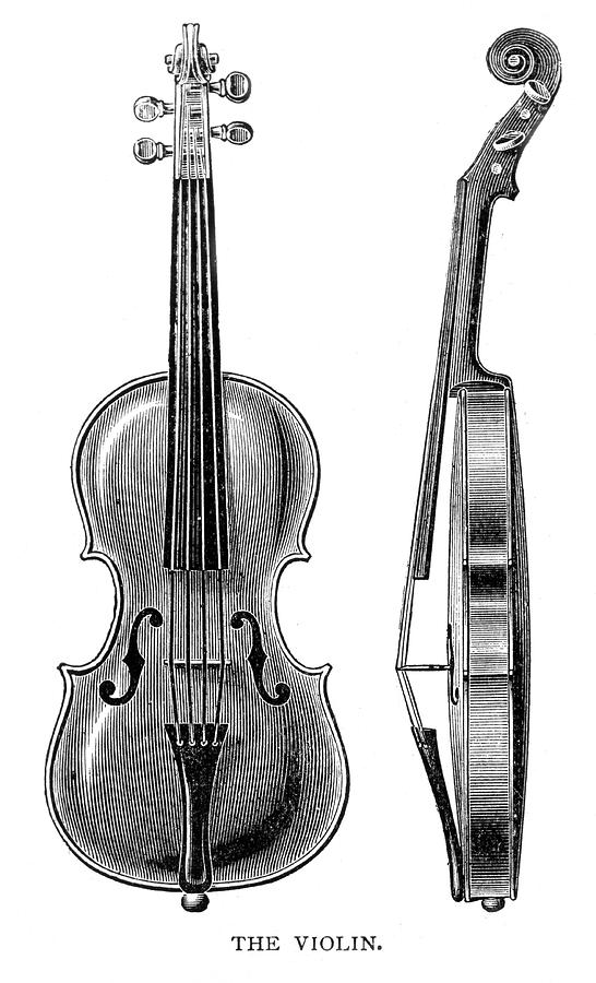 sketch of a violin the violin has four strings tuned drawing by mary evans of a sketch violin