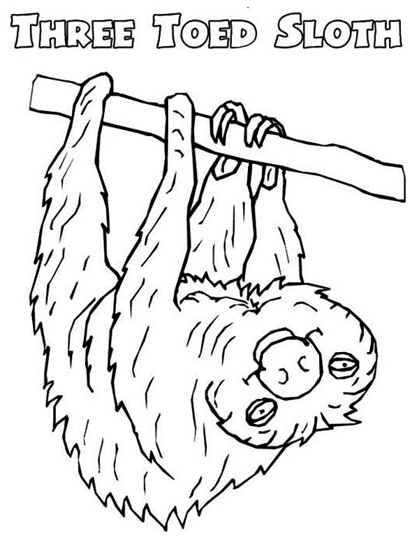 sloth pictures to print cute sloth coloring page print pictures sloth to