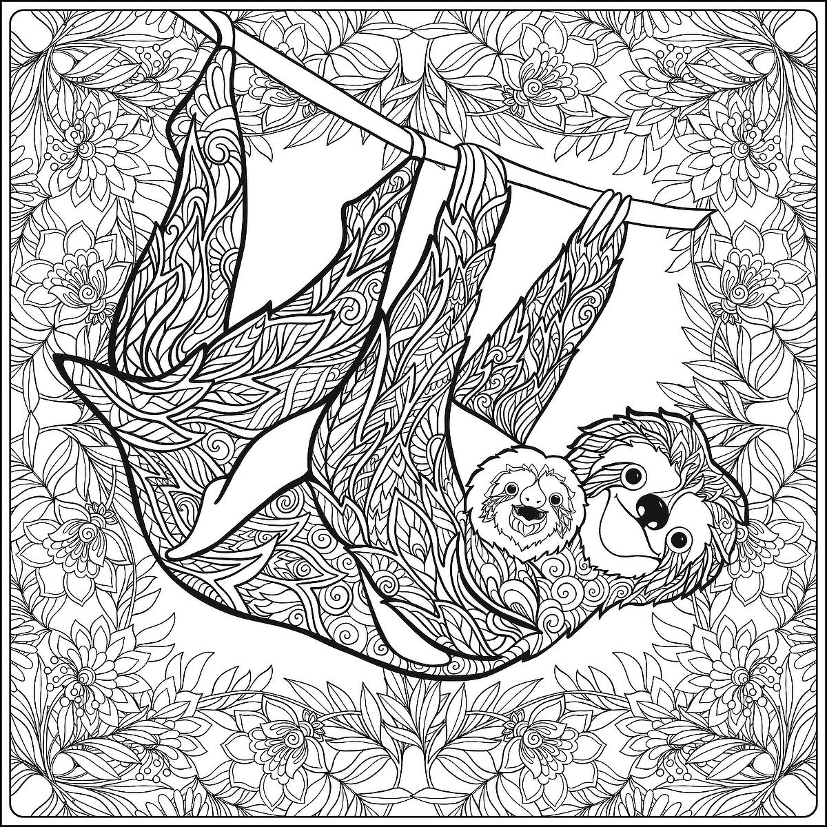 sloth pictures to print cute sloth drawing at getdrawings free download to pictures sloth print