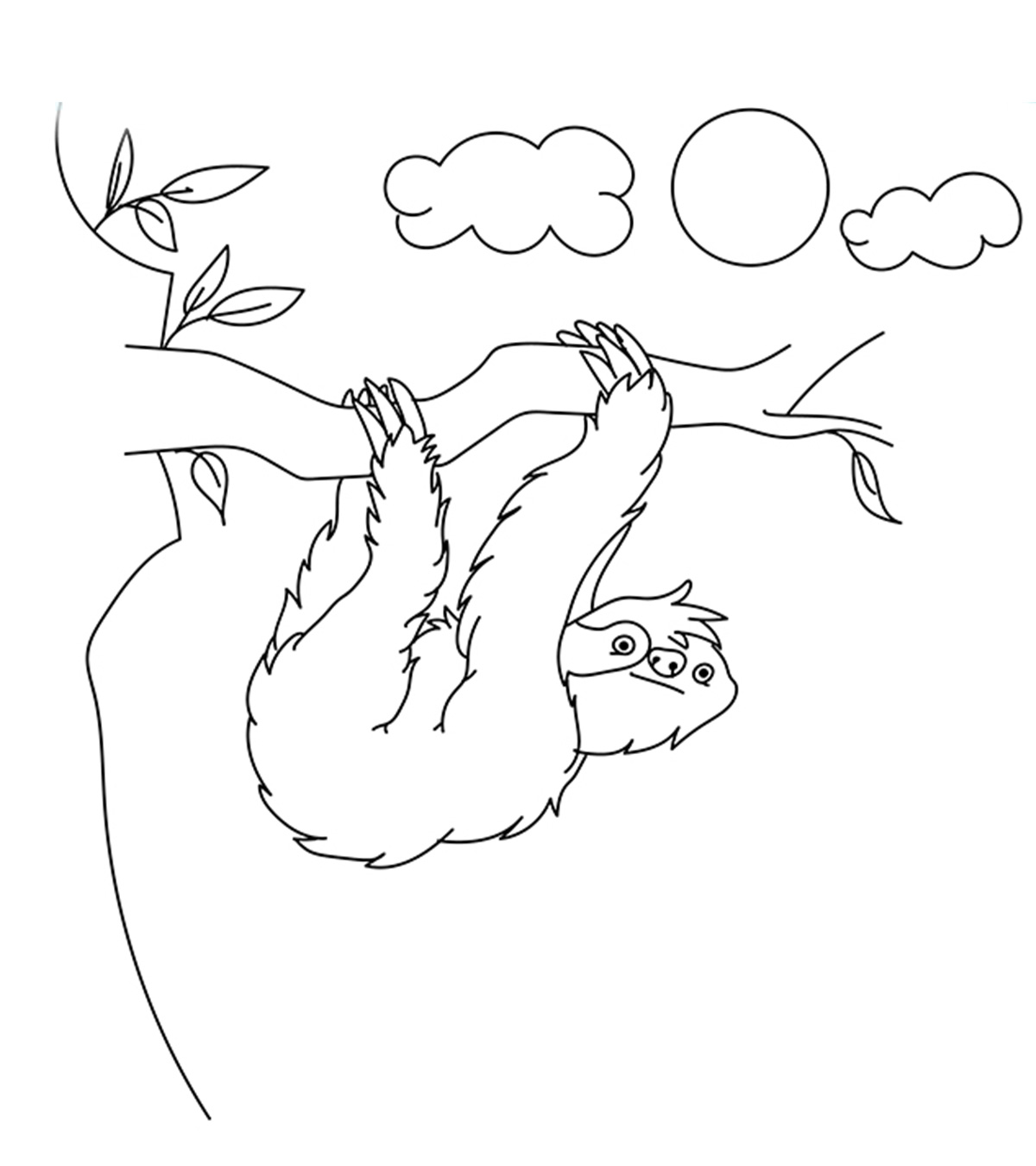 sloth pictures to print printable sloth coloring pages gallery free coloring sheets print pictures to sloth